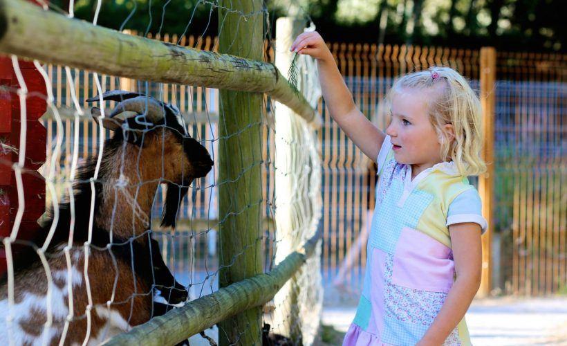 transfers-attica-zoo-park-2